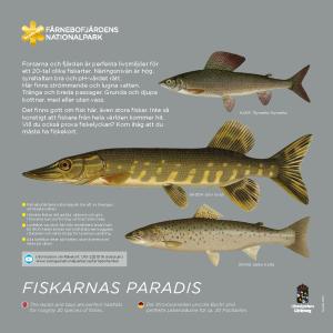 FISKE 300 x 300